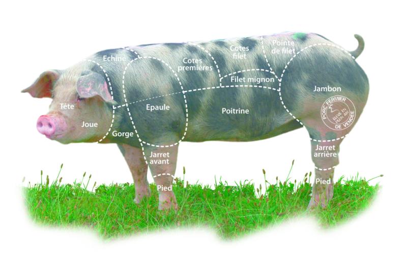 Porc+decoupe-1024x658