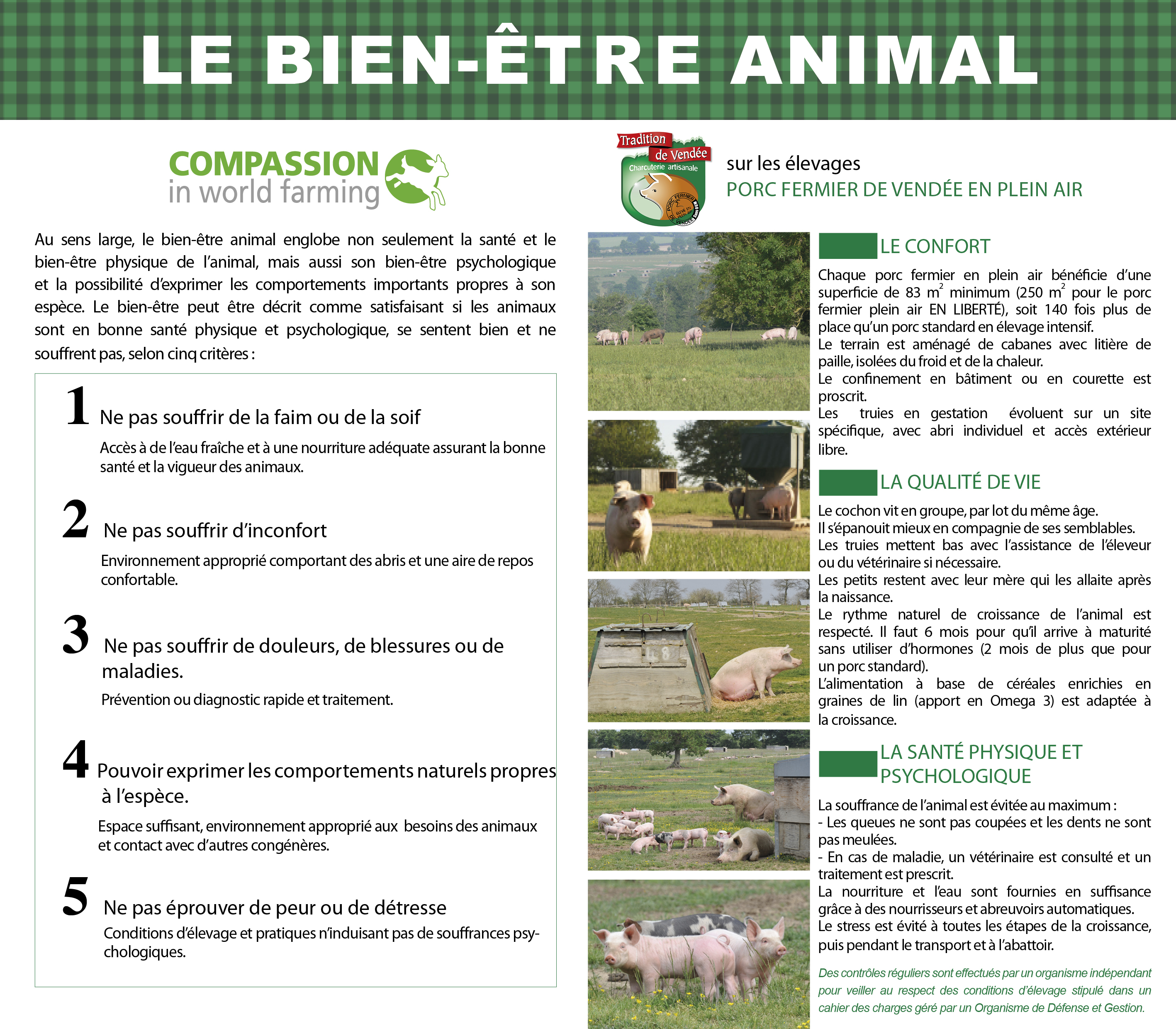 bien-etre-animal-porc-fermier-de-vendee-plein-air